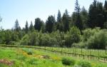 Londer vineyards