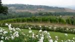 Palazzone Winery